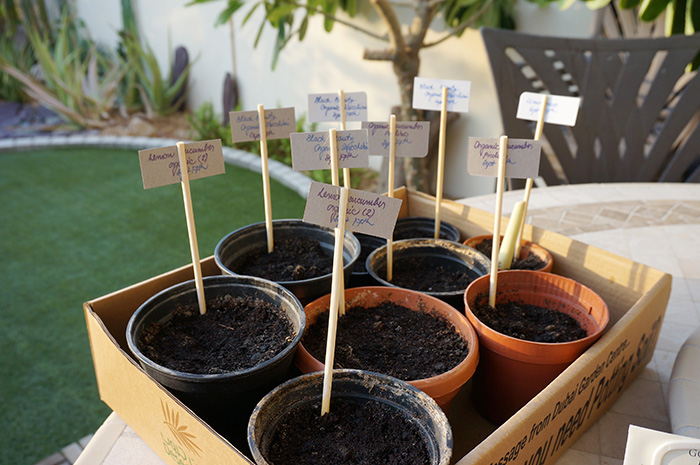 How to Start a Small Garden OR Simply Dust Off Your Window Sill