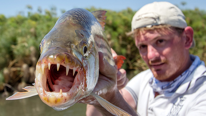 Crokango, or the Deadly Kiss of the Tigerfish – The First Trip