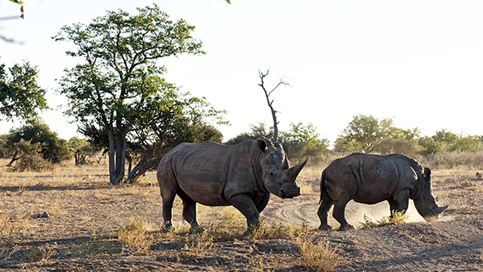 Action Against Poaching
