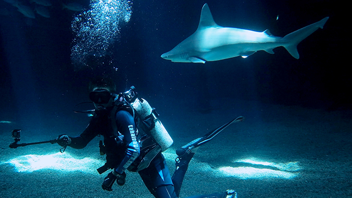 Experience the Nightlife of the Ocean