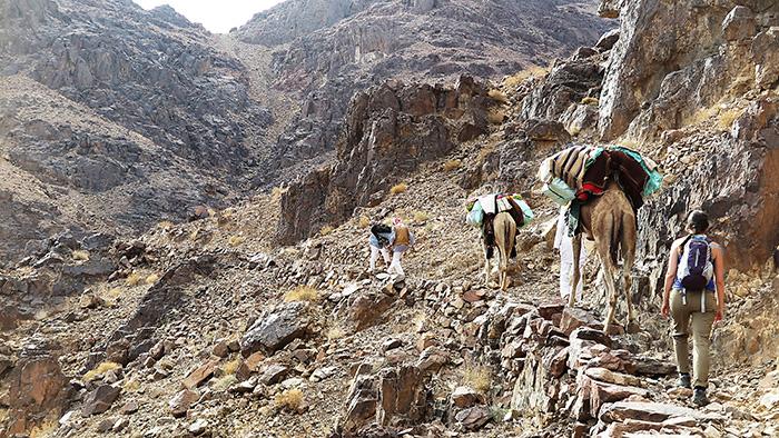 The Sinai Trail