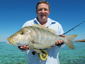The Spangled Emperor Snapper is a good fighting fish - a great target for fly if you find them in shallow water