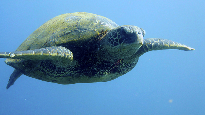 The Arabian Seas: A Biodiversity Hotspot