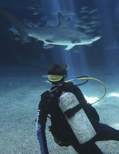 UAE scuba Diving