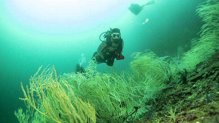 Diving in the Musandam of Oman