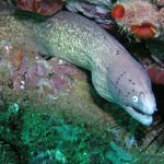 Scuba 2000 Diving and Resort