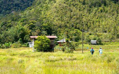 Running Wild in Bario – (50km Trail Race)