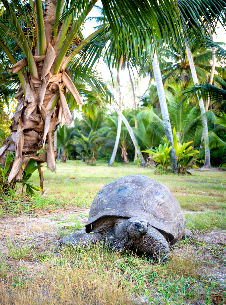Alphonse Island and the Seychelles