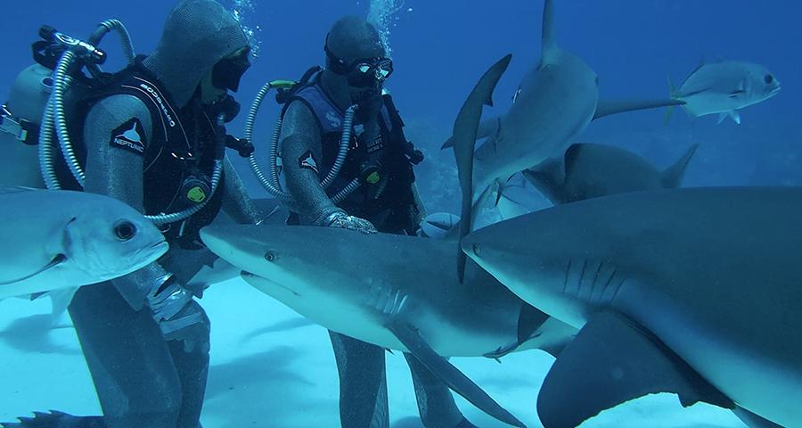Shark-Suit-Grand-Bahamas-Shark-Diving-NicodeCorato-Cinzia-Verzeri-Cristina-Zenato-Fishing