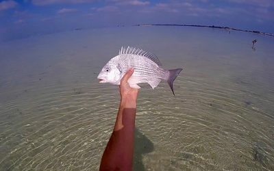Abu Dhabi – A Flats Fishing Paradise